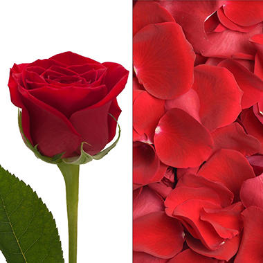 Rose and Petals Combo, Red (75 stems)