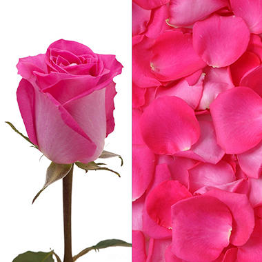 Hot Pink Rose and Petal Combo Box - 75 stems