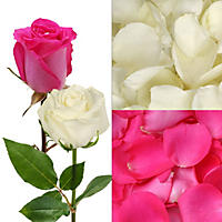 Roses and Petal Combo Box - Hot Pink and White - 75 Stems