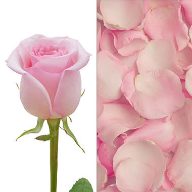 Roses and Petals Combo - Light Pink (75 stems)