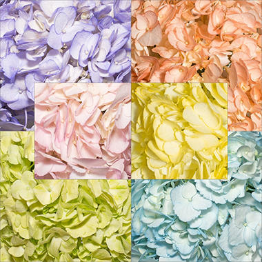 Hydrangeas - Hand Painted Spring Assortment (26 Stems)