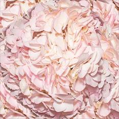 Hydrangeas - Hand Painted Light Pink - 26 Stems
