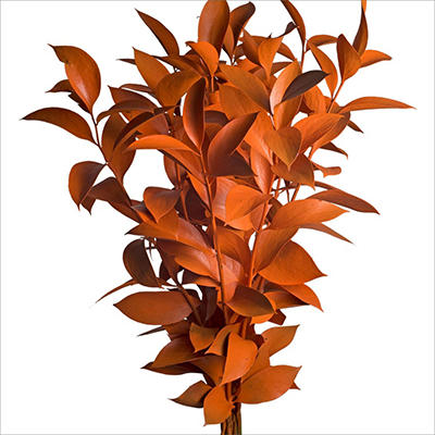 Ruscus - Painted Orange - 120 Stems