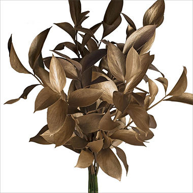 Ruscus - Painted Gold - 120 Stems