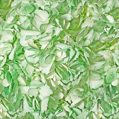 Hydrangeas - Painted Christmas Green - 26 Stems