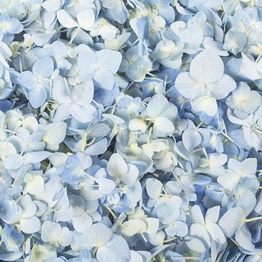 Hydrangea Petals-Blue-16 pk.