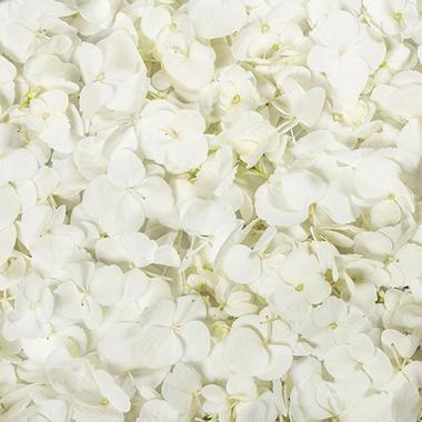 Hydrangea Petals-White-26 pk.