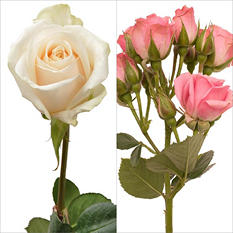 White Roses and Light Pink Spray Roses - Combo