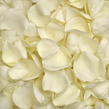 Rose Petals - White