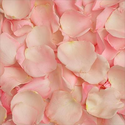 Rose Petals - Pink