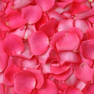 Rose Petals - Hot Pink