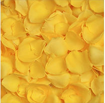 Rose Petals - Yellow