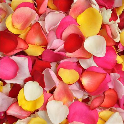 Rose Petals - Rainbow
