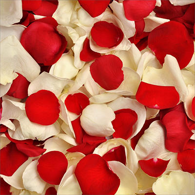 Rose Petals - Red and White