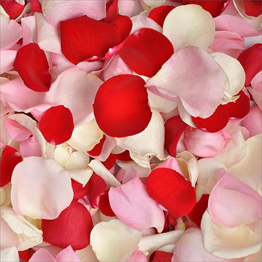Rose Petals - Red, White and Pink