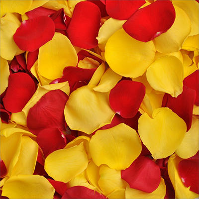 Rose Petals - Red and Yellow