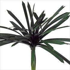 Green Lily Grass - 120 pk.