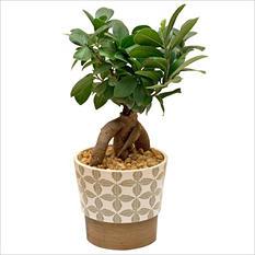 "Bonsai Leaf Planter - 5"" to 6"""