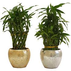"""Inga Bamboo Planter - 4"""""""