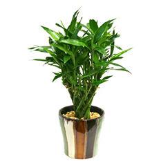 """Anna Bamboo Planter - 4"""""""
