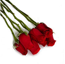 Do It Yourself Red Roses – 100 pk.
