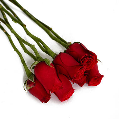Do It Yourself Red Roses (100 pk.)