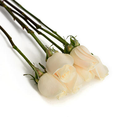 Do It Yourself White Roses - 100 pk.