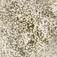 Gypsophilia, Mirabella (Choose bunch count)