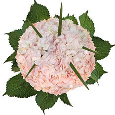 Hydrangea Bouquet - Painted Light Pink (8 pk.)