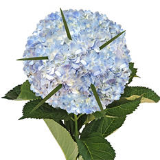 Hydrangea Bouquet and Petals Combo - Blue (8 pk.)
