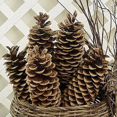 Sugar Pine Cones - 30 pk.