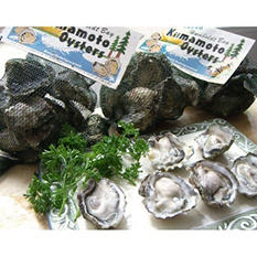 "1 1/2"" - 2"" Long Line Live In-Shell Kumamoto Oysters"