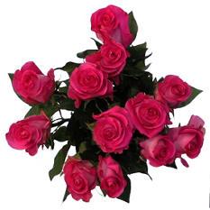 Various Colors XL Blooms Rose Bouquet - 12 Stems