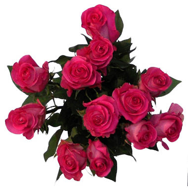 Various Colors XL Blooms Rose Bouquet - 12 Stems