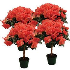 """6"""" Keepsake Azalea Tree - Coral - 4 pk."""