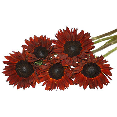 Natural Red Sunflowers (80 Stems)