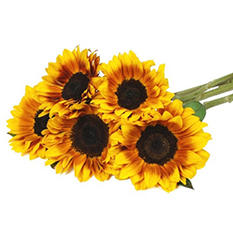 Mahogany Sunflowers (80 Stems)