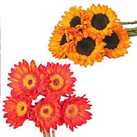 Tinted Sunflowers, Red & Orange (80 Stems)