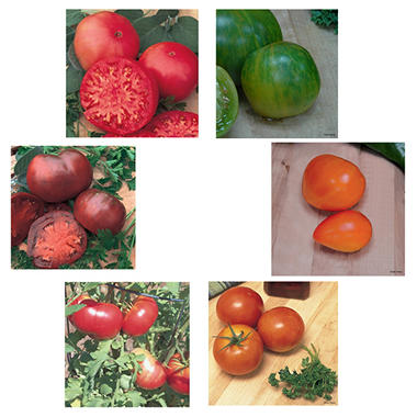 Organic Heirloom Tomato Collection of Plants - Package of 6