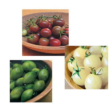 Organic Unique & Wild Tomato Collection of Plants -  Package of 6
