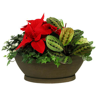 Poinsettia Foliage Centerpiece