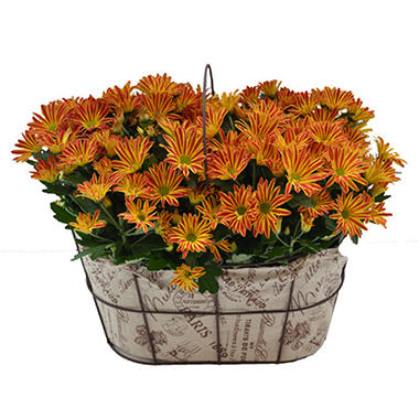 Point Pelee Double Mum Basket