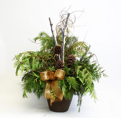 Holiday Greens - Annual Plant