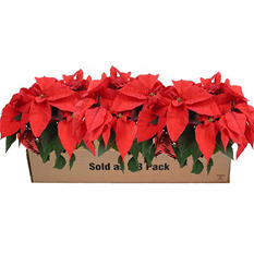 Poinsettia, Red (3 pack)