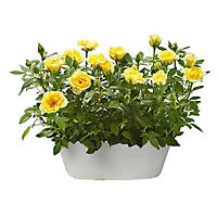 Gift Basket of Yellow Roses