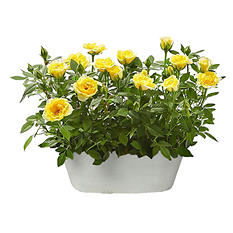 Gift Basket of Yellow Roses