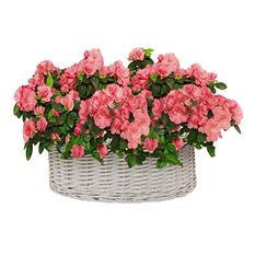 "9"" Basket of Azaleas"