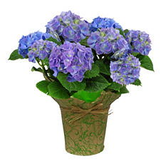 """9"""" Pink Hydrangea Potted Plant by One Floral"""