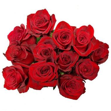 Various Colors -  European Cut Roses - 12 Stems