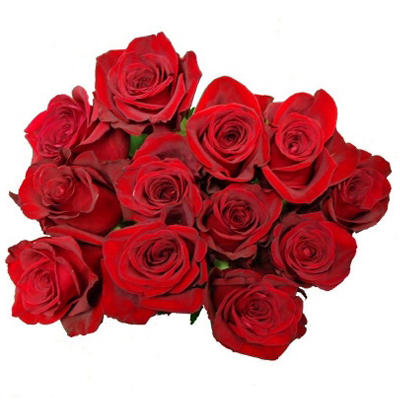 Premium Holiday Roses - 12 Stems